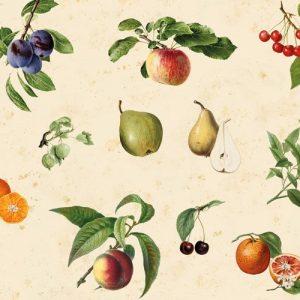 Vintage Fruit - Spatwand met print