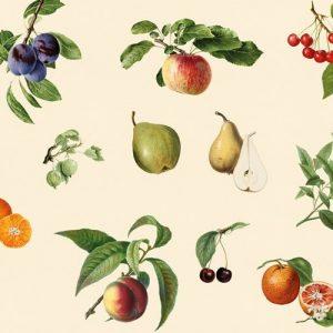 Vintage Fruit - Spatwand met print - Extra motief