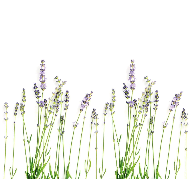 Lavendel Spatwand